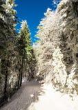 Estrada de floresta da neve Imagem de Stock