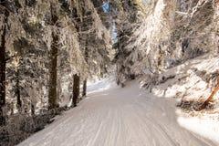 Estrada de floresta da neve Fotos de Stock