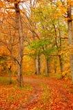 Estrada de floresta da queda Fotografia de Stock Royalty Free