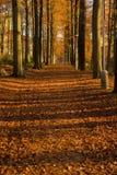 Estrada de floresta do outono Imagem de Stock Royalty Free