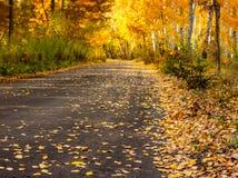A estrada de floresta do outono com ouro sae - da paisagem fotos de stock