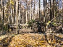 Estrada de floresta do outono obstruída pelas árvores cobertas com a neve Fotos de Stock Royalty Free