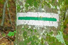 Estrada de floresta do sinal Foto de Stock Royalty Free