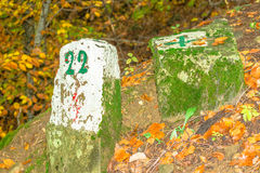 Estrada de floresta do sinal Imagens de Stock