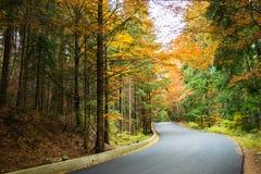 Estrada de floresta durante fim de outubro imagem de stock royalty free