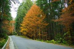 Estrada de floresta durante fim de outubro fotografia de stock