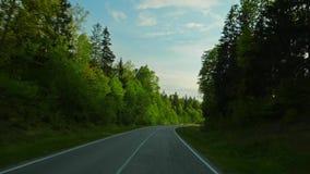 Estrada de floresta e o sol