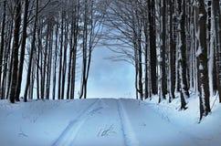 Estrada de floresta a em nenhuma parte Fotos de Stock