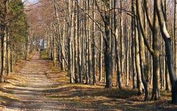 Estrada de floresta entre árvores Fotos de Stock Royalty Free