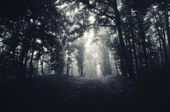 Estrada de floresta escura Fotografia de Stock Royalty Free