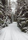 Estrada de floresta estreita do inverno coberta com a neve com árvores Imagens de Stock