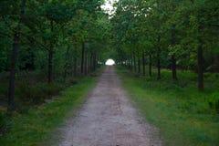 A estrada de floresta longa condu-lo ao desconhecido Fotografia de Stock Royalty Free