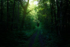 Estrada de floresta mágica através das árvores Fotografia de Stock Royalty Free