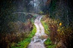 Estrada de floresta molhada fotografia de stock royalty free