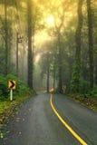 A estrada de floresta na manhã nevoenta adiantada com sol visível irradia Foto de Stock