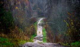 Estrada de floresta na queda atrasada fotografia de stock