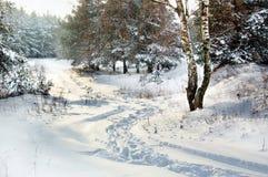 Estrada de floresta nevado Fotografia de Stock Royalty Free
