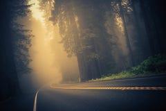 Estrada de floresta nevoenta foto de stock
