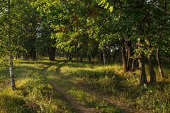 Estrada de floresta no bosque do carvalho sob a luz solar imagens de stock royalty free
