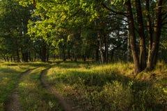 Estrada de floresta no bosque do carvalho sob a luz solar imagem de stock royalty free