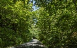 Estrada de floresta no valor máximo de concentração no trabalho do Koh fotografia de stock royalty free