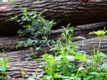 Estrada de floresta no valor máximo de concentração no trabalho do Koh Floresta na área de Kluczbork imagens de stock royalty free