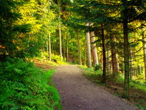 Estrada de floresta no valor máximo de concentração no trabalho do Koh Imagem de Stock