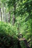 Estrada de floresta no valor máximo de concentração no trabalho do Koh Fotografia de Stock