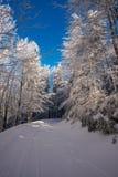 Estrada de floresta no valor máximo de concentração no trabalho do Koh imagens de stock