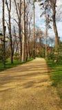 Estrada de floresta no valor máximo de concentração no trabalho do Koh imagens de stock royalty free