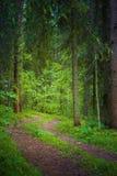 Estrada de floresta no valor máximo de concentração no trabalho do Koh Rússia Imagens de Stock