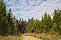 Estrada de floresta no verão Imagem de Stock