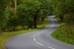 Estrada de floresta nova vazia Imagens de Stock Royalty Free