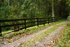 Estrada de floresta outonal imagens de stock