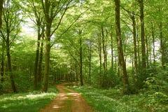 Estrada de floresta que conduz através da floresta Foto de Stock