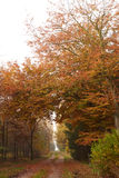 Estrada de floresta que conduz através da floresta na queda Imagens de Stock Royalty Free
