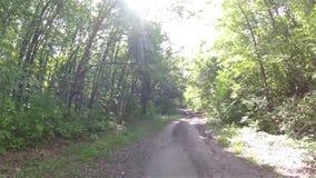 Estrada de floresta rural Rússia voronezh video estoque