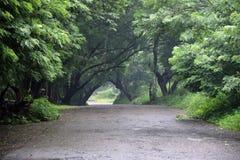 Estrada de floresta só foto de stock royalty free