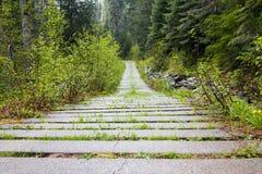 Estrada de floresta velha Fotografia de Stock Royalty Free