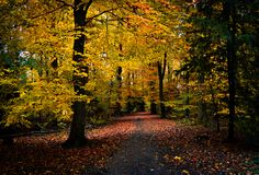 Estrada de floresta velha no Bos de Amsterdamse com as folhas alaranjadas e amarelas do outono Fotos de Stock