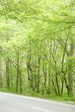 Estrada de floresta verde imagens de stock