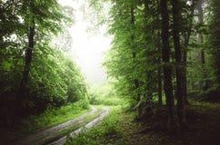 Estrada de floresta verde com névoa Imagem de Stock Royalty Free