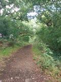 Estrada de Forrest entre arbustos Fotografia de Stock