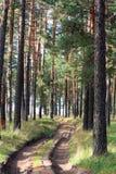 Estrada de madeira Fotografia de Stock Royalty Free