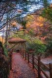 Estrada de madeira com folhas vermelhas Fotografia de Stock