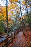 Estrada de madeira com folhas vermelhas Fotografia de Stock Royalty Free