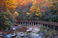 Estrada de madeira e floresta dourada da queda Imagens de Stock Royalty Free