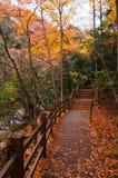 Estrada de madeira na floresta dourada da queda imagens de stock royalty free