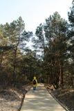 Estrada de madeira nova que conduz da praia do golfo do mar B?ltico com a areia branca ? floresta da duna com pinheiros fotos de stock royalty free