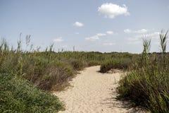 Estrada de Sandy que conduz ao mar entre plantas verdes Imagem de Stock Royalty Free